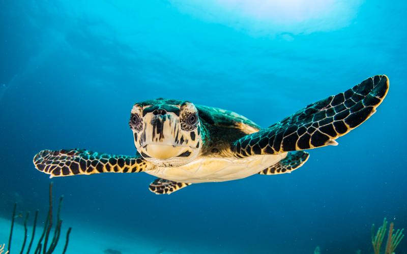 Abschlusstour 2021 / Marinepark Red Sea
